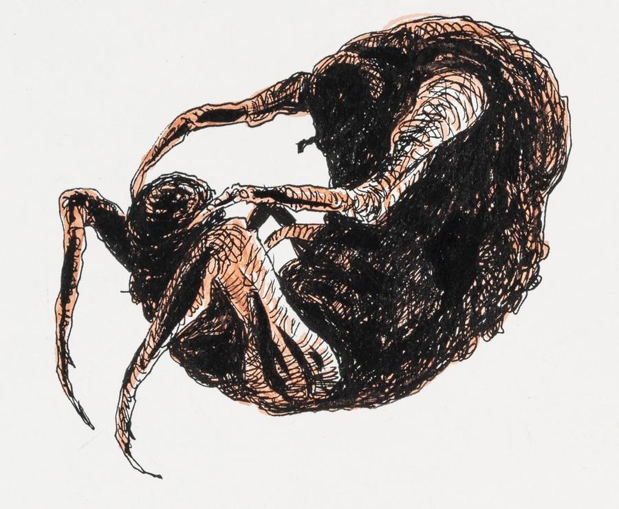 Ilustração de Lourenço Mutarelli para Metamorfose